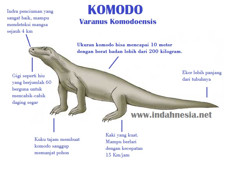 an analysis of komodo dragons in sumba Sumba sumbawa timor and roti  supervised cleaning, conservation, and analysis  komodo dragons were the only threat—which makes size and strength less.